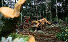 Desmatamento na Amazônia – Conceito e consequências