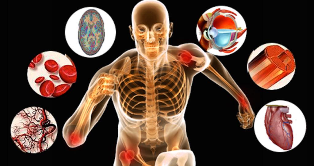 fisiologia humana exercícios