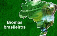 Biomas Brasileiros – 6 tipos naturais