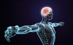 Fisiologia Humana Enem – Resumo para se dar bem!