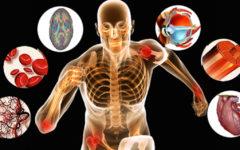 Fisiologia Humana – 30 Exercícios de retenção para o Enem