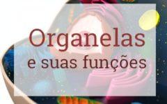 Organelas Citoplasmáticas – Citologia [VÍDEO]